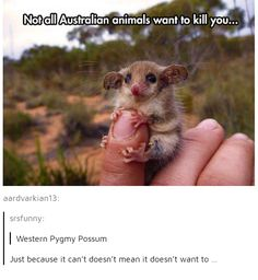 I don't trust you, possum...