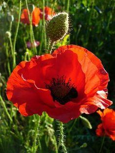 Flowers Pretty Beautiful