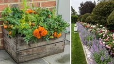 Správnym umiestnením byliniek v záhrade sa zbavíte škodcov a podporíte rast kultúrnych plodín. Viete, ako na to?