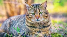 Zvířata Zvuky zvířat Cats, World, Youtube, Women's Fashion, Animals, Gatos, Fashion Women, Animales, Animaux