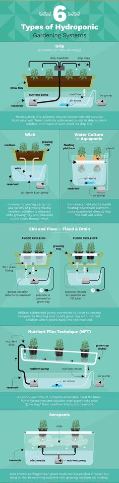 6 Different Hydroponic Gardening Systems For Growing Food. 6 Different Hydroponic Gardening System Hydroponic Growing, Hydroponic Gardening, Growing Plants, Organic Gardening, Container Gardening, Gardening Tips, Aquaponics Greenhouse, Aquaponics Plants, Gardening Supplies