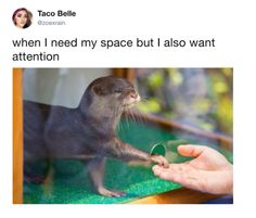 Make your day so much better with this really amusing otter meme collection. Animal Captions, Animal Memes, Baby Animals, Funny Animals, Cute Animals, Otter Meme, Otters Funny, Funny Cute, Hilarious