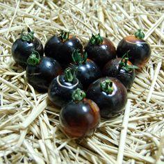 Blue Tomato Midnight Select ブルー・トマト・ミッドナイト・セレクト