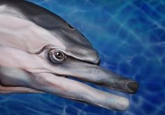 A hand painted as a Dolphin which is coined as a 'Handimal' by it's artist Guido Daniele.