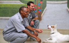 In two years, 468 rescue dogs have been placed with families after being trained by inmates in the Missouri Department of Corrections' 'Puppies for Parole' programme. They teach the dogs, which come from local animal shelters, how to behave and prepare them for adoption.