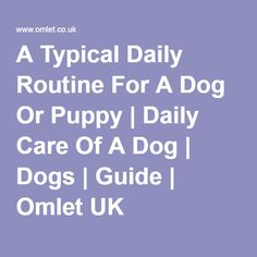 A Typical Daily Routine For A Dog Or Puppy | Daily Care Of A Dog | Dogs | Guide | Omlet UK