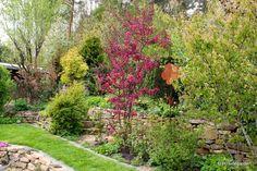 Hillsidegarden: April 2015
