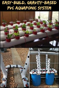 Aquaponics System Research - Everything you should know about Aquaponics Made Easy, Home Aquaponics, Backyard Aquaponics and Ecofriendly Aquaponics. Hydroponic Farming, Backyard Aquaponics, Aquaponics Plants, Hydroponic Growing, Hydroponics System, Diy Hydroponics, Backyard Greenhouse, Greenhouse Ideas, Growing Plants