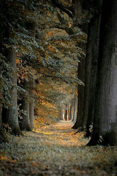 """""""And miles to go before I sleep, And miles to go before I sleep."""" ~ Robert Frost"""