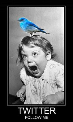 ....twitter!