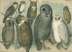 vintage owls by pomegranates, via Flickr