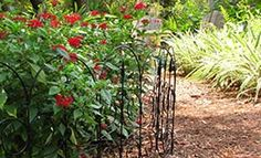 Gulf Coast Gardening: Think 'Evergreen' when Edging Pathways