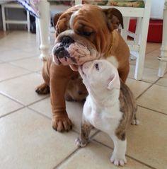 Maman, tu es tout pour moi!