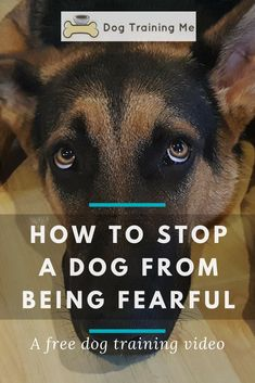 How to stop a dog from being fearful. We cover some of the signs of a fearful dog so you can tell when they are afraid. Find out if you are contributing to your dog's fear, and how to help a fearful dog gain confidence again. Click through now for a free dog training video. #fearfuldog #dogafraid #dogtraining