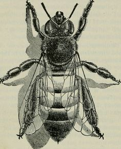 "Image from page 215 of ""The ABC of bee culture: a cyclopae… 