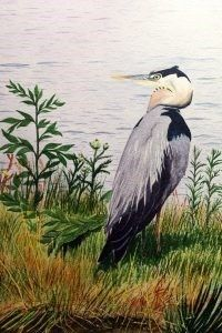 Nature can be exceptionally inspiring! That's why Nature Canada is hosting an art auction to raise funds raised to support efforts to protect and conserve nature across Canada.  Christopher potter blue heron