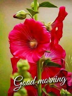 Good Morning Beautiful Flowers, Good Morning Roses, Good Morning Images Flowers, Beautiful Red Roses, Beautiful Bouquet Of Flowers, Morning Pictures, Exotic Flowers, Good Morning Messages Friends, Hollyhocks Flowers