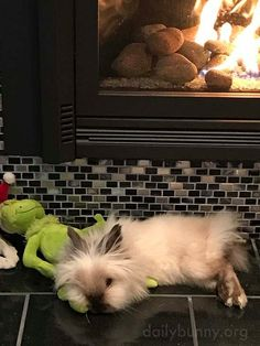 Twinkie, the Lionshead bunny uses the Grinch as a pillow.