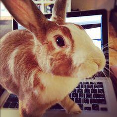 Digi bunny loves Apple!