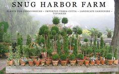 Growing with plants: The Curated Delights of Maine's Snug Harbor Farm