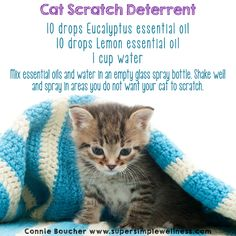 #Cat Scratch #Deterrent: 10 drops #Eucalyptus #essentialoil, 10 drops #Lemon essential oil, 1 cup water. Mix #essentialoils and #water in an empty glass spray bottle. Shake well and spray in areas you do not want your cat to scratch. #natural #allnatural #claws #kitty #kitten #pets #EO #EOlove #essentialoilsolutions #ConnieBoucher #SuperSimpleWellness #health #chakra #wellness