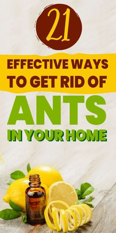 Homemade Cleaning Supplies, Household Cleaning Tips, Cleaning Recipes, Ant Killer Recipe, Homemade Ant Killer, Ant Remedies, Natural Remedies, Ant Bites, Bug Spray Recipe