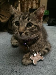 Cat promposal #prom #cat