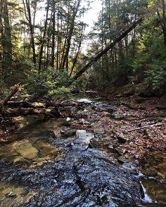 "Sam Calhoun on Instagram: ""Creek in Bankhead National Forest #explore #getoutstayout  #optoutside #getoutide #adventuretime #travelblogger #travel #roadtrip…"""
