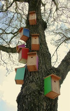 Vrolijk gekleurde #vogelhuisjes hangen overal in #Zwolle