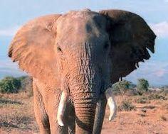 imagenes de animales - Buscar con Google