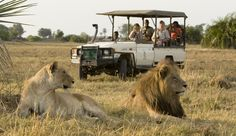 http://www.perfectafrica.com/destinations/botswana/chobe/tours-and-safaris/recommended/