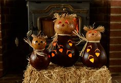 Oakley, our brown scarecrow gourd with acorns cut out.