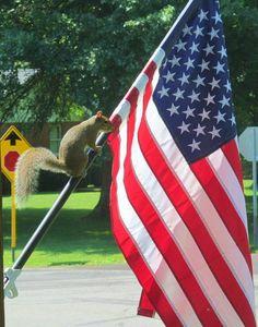 Patriotic squirrel on my flag pole!