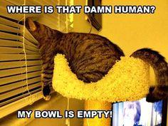 Where is that Damn human