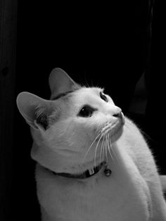 this looks just like jaxy cat!