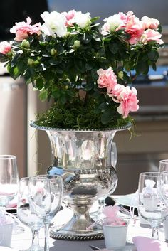 Using champagne buckets as a vases, rose bush in a champange bucket.