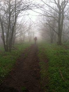 Conductor's 2015 Appalachian Trail Photos : Cloudy Trail - Sunday, April 26, 2015