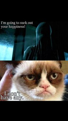 Grumpy cat strikes again.haha Harry Potter and Grumpy Cat.dementors can kiss his grumpy butt Grumpy Cat Quotes, Grumpy Cats, Funny Grumpy Cat Memes, Cat Jokes, Funny Cats, Funny Animals, Cute Animals, Funny Memes, Memes Humor