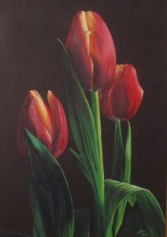 Pin On Pintura De Tulipa