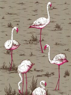 Cole and Son Flamingos Wallpaper. Love,Love,Love!