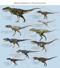 North American Tyrannosaurs by PaleoGuy on deviantART Prehistoric Wildlife, Prehistoric World, Prehistoric Creatures, Dinosaur Art, Dinosaur Fossils, Dinosaur Crafts, Reptiles, Mammals, Spinosaurus