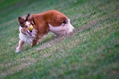 Dog Park in Quebec - Photo Contest Winner