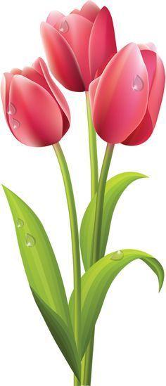pink tulips clip art more estos tulipanes tulip art clip art clipart ...