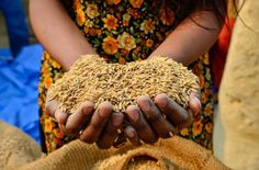 The Sustainable Food Trust, founded by Patrick Holden, is a global voice for sustainable food systems, aiming to empower communities with sustainable ideas, and push for government policy changes. Food Security, Food System, Sustainable Food, Climate Change, Nepal, Lovely Things, Middle East, Peru, Poultry