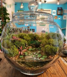 This Company Makes Incredible Micro Ecosystems In Pots And You Will Definitely Want One In Your Home Fish Tank Terrarium, Terrarium Plants, Succulent Terrarium, Glass Containers, Glass Jars, Plants In Jars, Diy Garden Fountains, Paludarium, Plant Decor