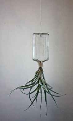 succulent in a bottle  how cute would several of these be hanging on a porch