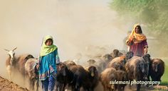 Shepherd Girls From Balochistan, Pakistan - during winter season many families from Baluchistan and Afghanistan come to Punjab , Pakistan to get some green food for their sheep and goats , Goat Paintings, Art Shed, Sunrise Painting, Father Time, The Good Shepherd, Painting Of Girl, People Of The World, World Cultures, Winter Season