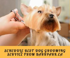 #BarkPark offers the finest and most sophisticated #doggrooming services in Alberta. We have an extensive array of grooming services to keep your #pets looking their best and staying healthy.  Book #Dog Grooming services on-demand at the best prices. Hurry Up!