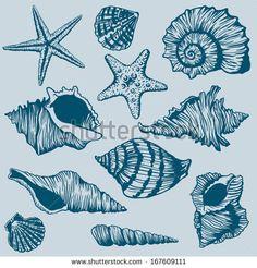 Set of Shells - Illustration - stock vector