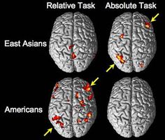 This picture depicted how different cultures affects the brain